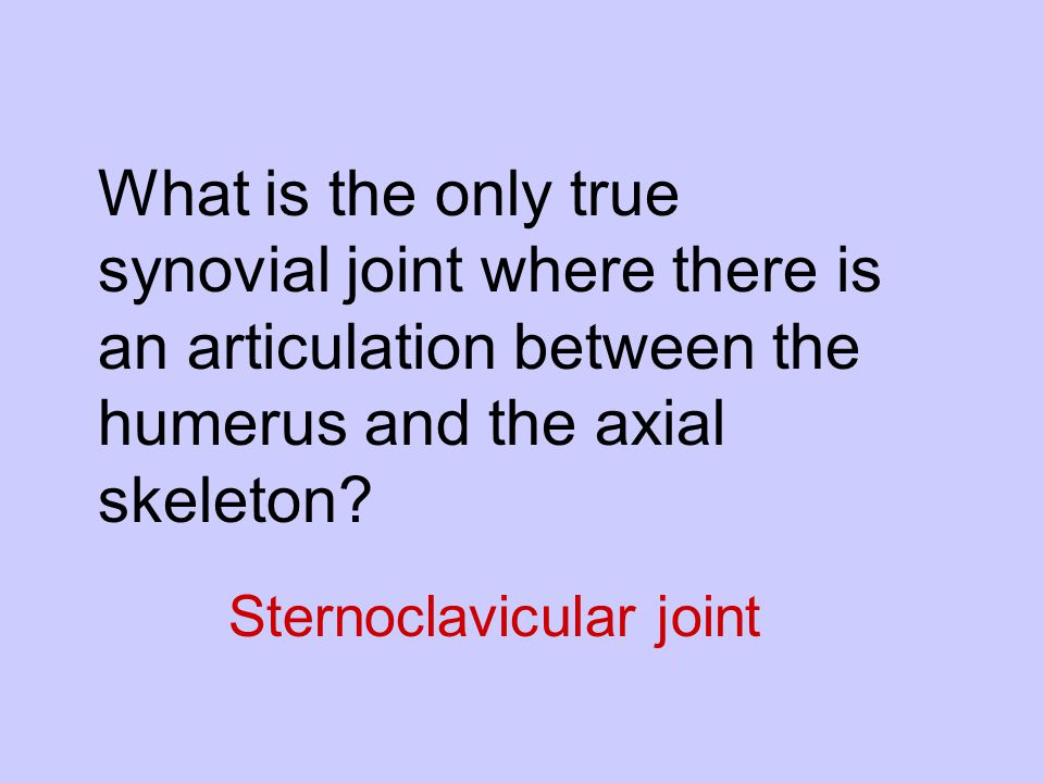 What is the only true synovial joint where there is an articulation between the humerus and the axial skeleton