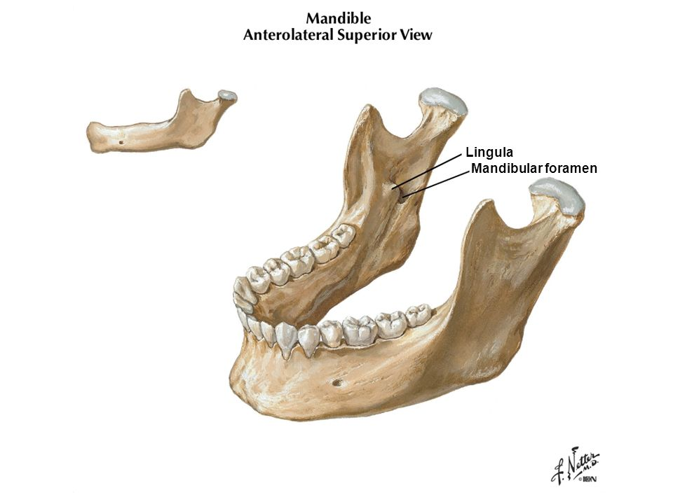 Lingula Mandibular foramen