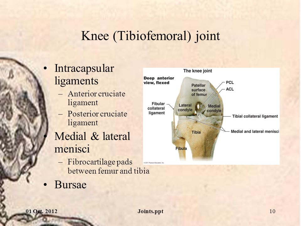 Knee (Tibiofemoral) joint