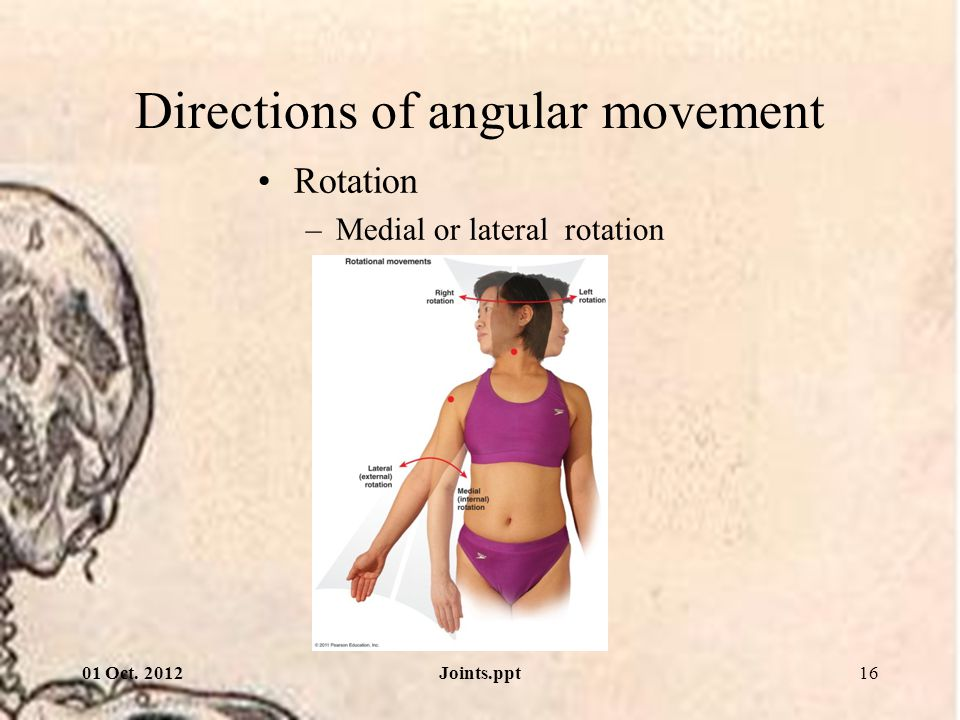 Directions of angular movement