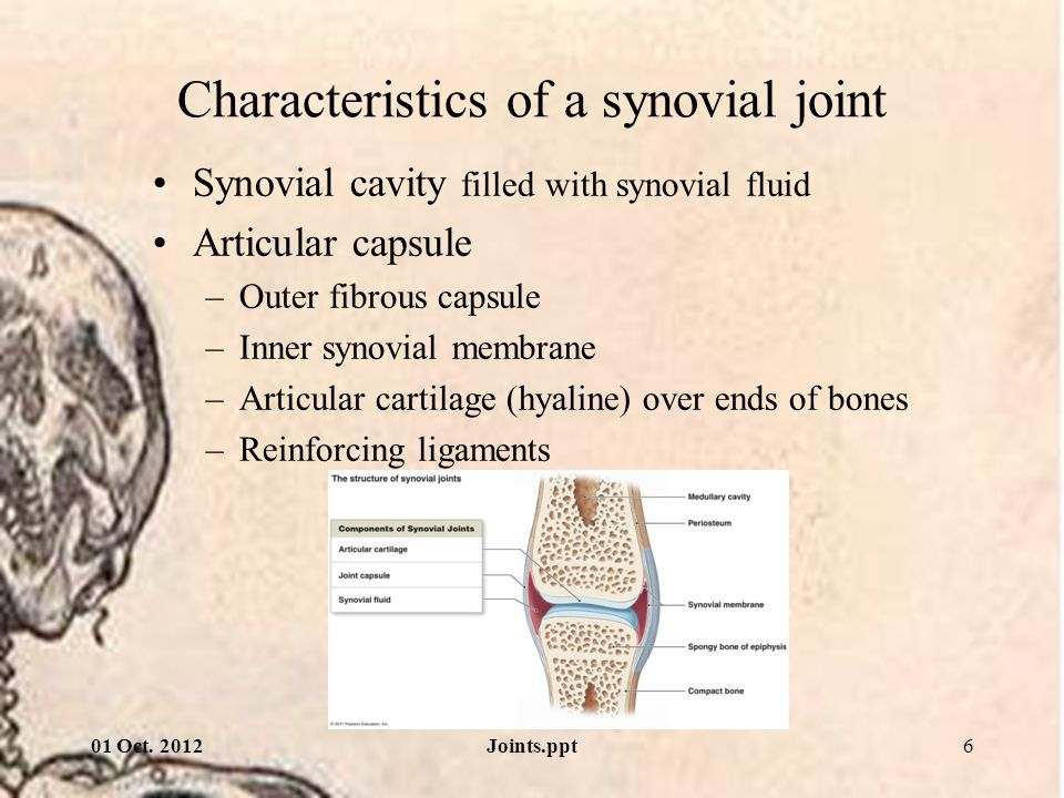 Characteristics of a synovial joint