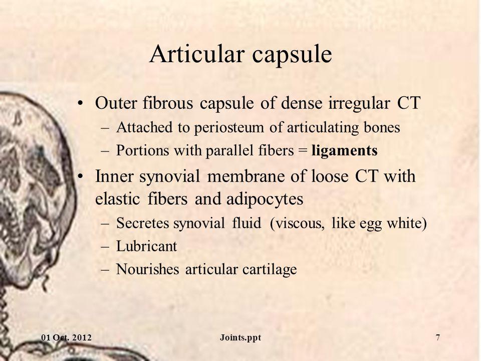 Articular capsule Outer fibrous capsule of dense irregular CT