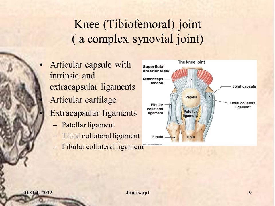 Knee (Tibiofemoral) joint ( a complex synovial joint)