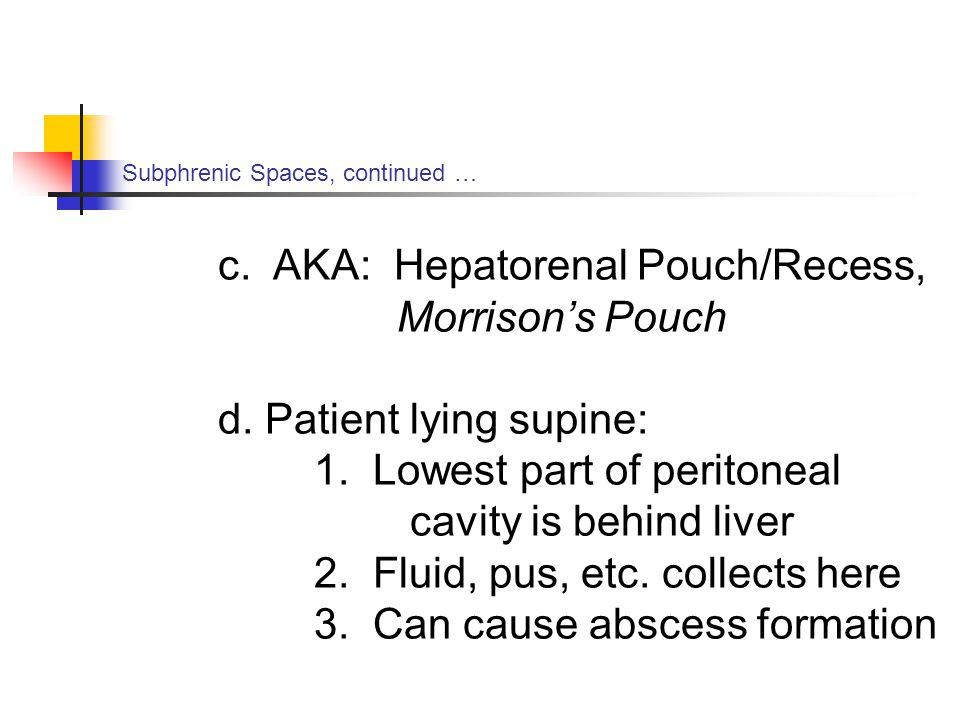 c. AKA: Hepatorenal Pouch/Recess, Morrison's Pouch
