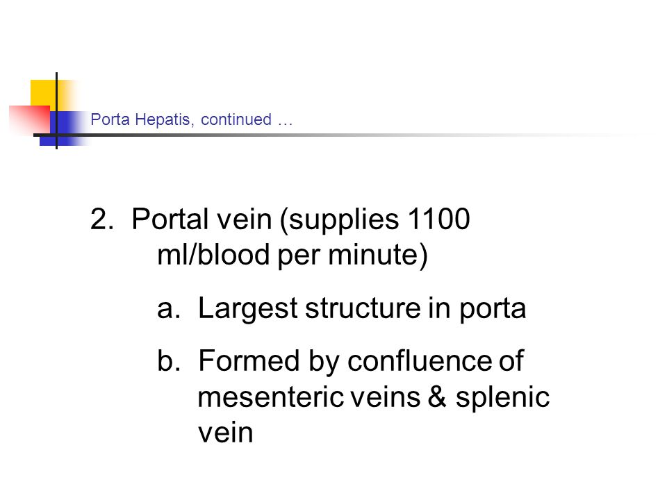 2. Portal vein (supplies 1100 ml/blood per minute)