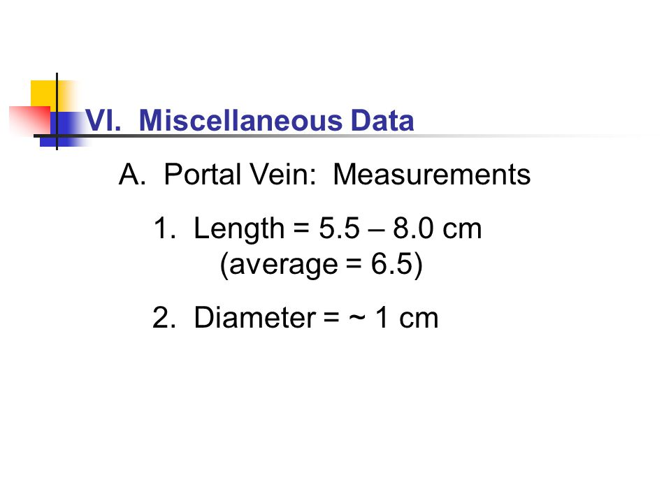 VI. Miscellaneous Data A. Portal Vein: Measurements. 1. Length = 5.5 – 8.0 cm (average = 6.5)