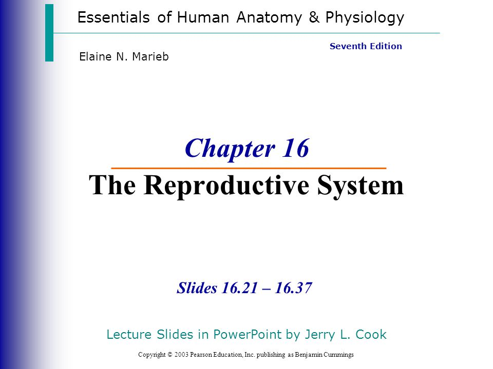 Chapter 16 The Reproductive System - ppt video online download