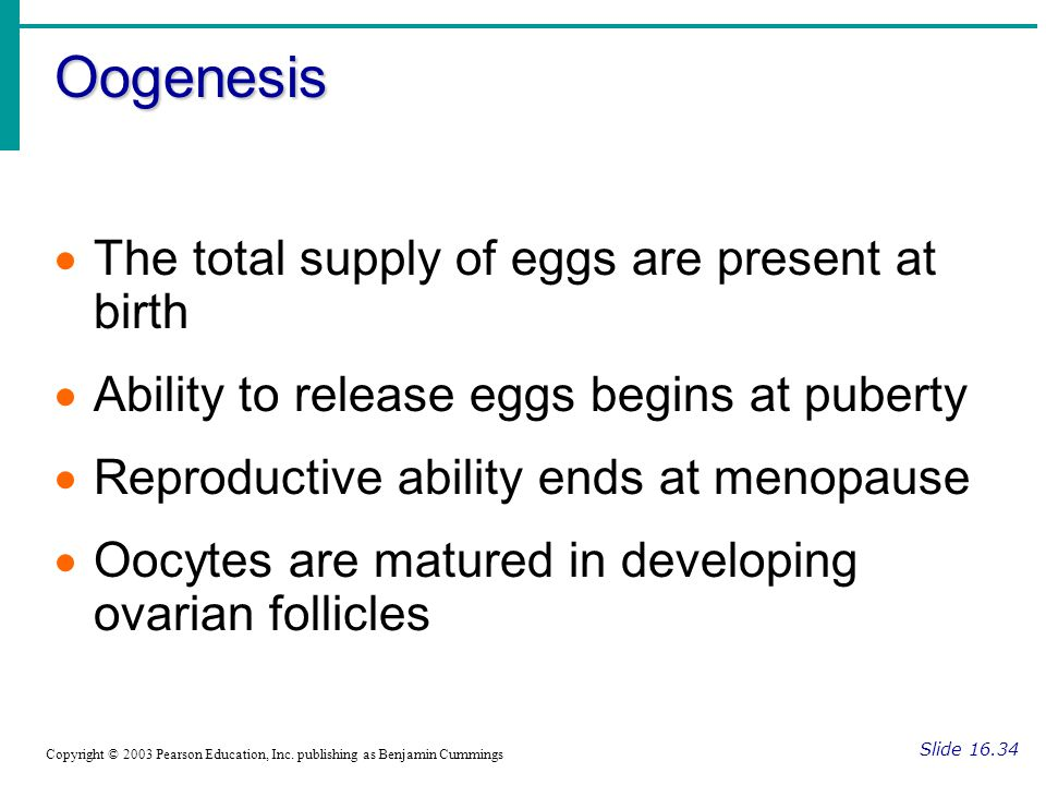Oogenesis The total supply of eggs are present at birth