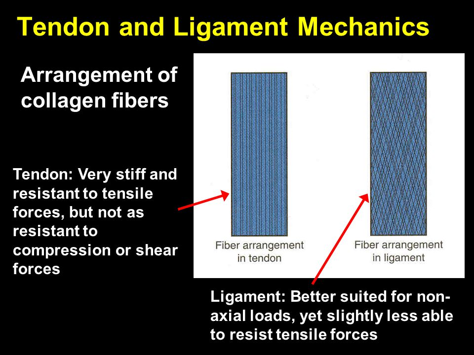 Tendon and Ligament Mechanics