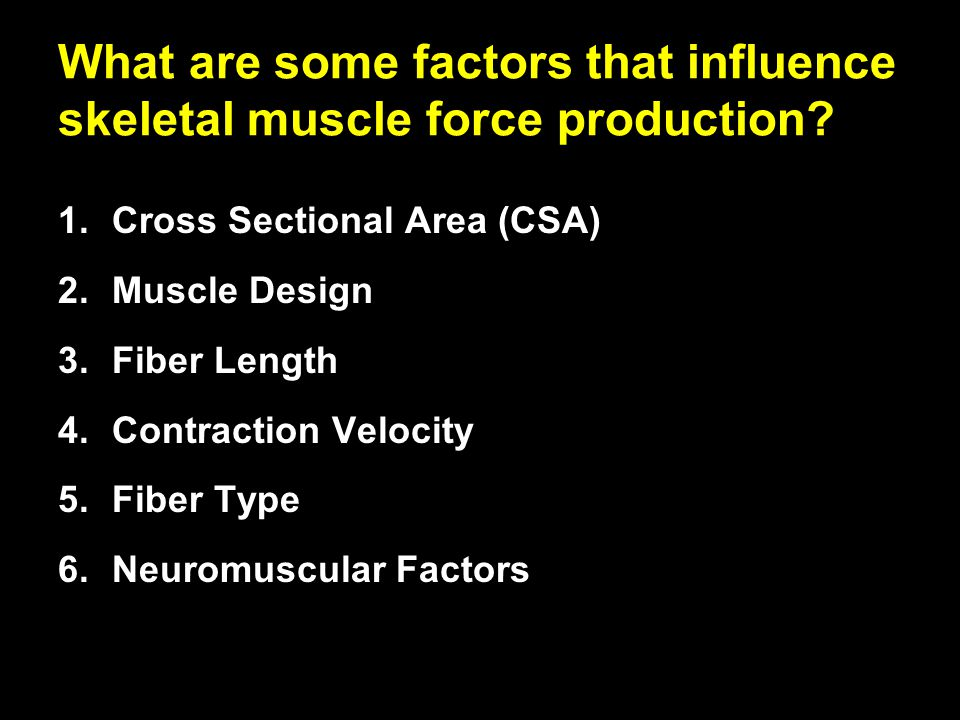 What are some factors that influence skeletal muscle force production