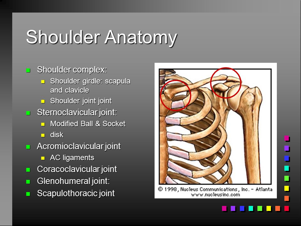 Shoulder Anatomy Shoulder complex: Sternoclavicular joint: