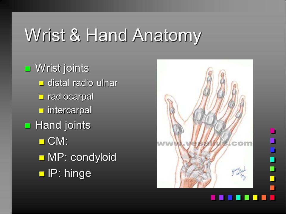 Wrist & Hand Anatomy Wrist joints Hand joints CM: MP: condyloid