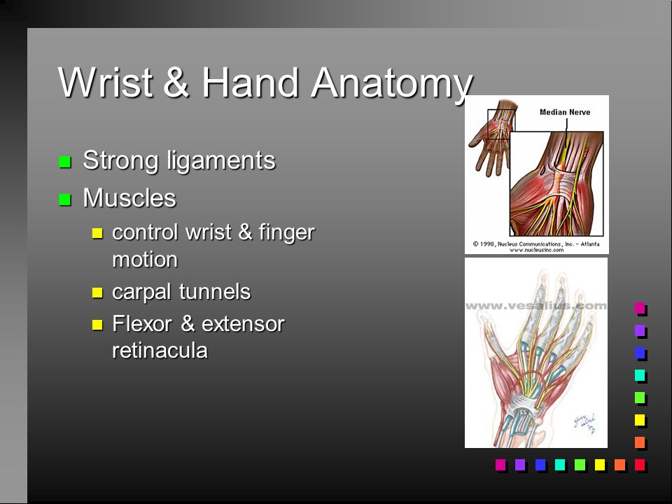 Wrist & Hand Anatomy Strong ligaments Muscles