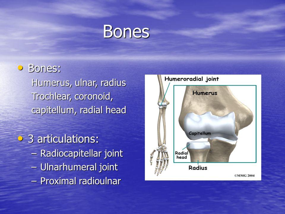 Bones Bones: 3 articulations: Humerus, ulnar, radius