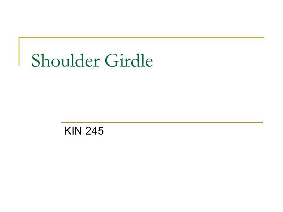 Shoulder Girdle KIN 245