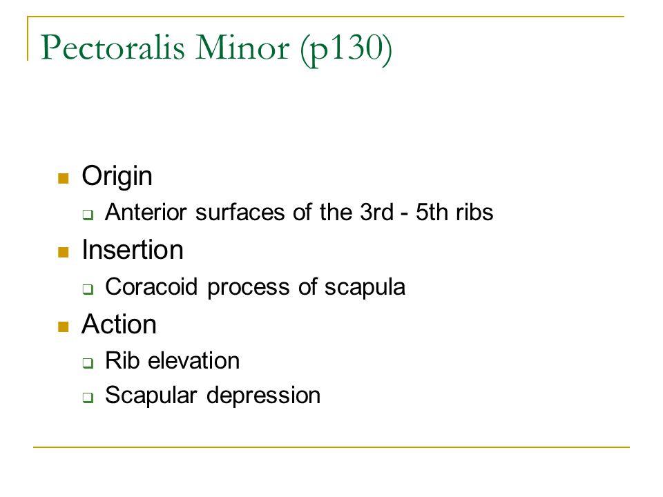 Pectoralis Minor (p130) Origin Insertion Action