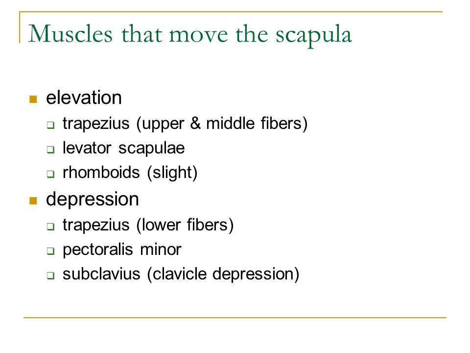 Muscles that move the scapula