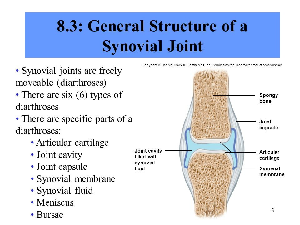 8.3: General Structure of a Synovial Joint