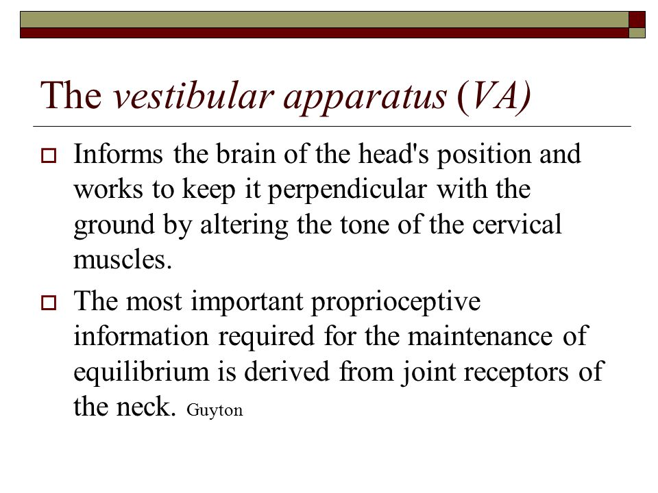 The vestibular apparatus (VA)