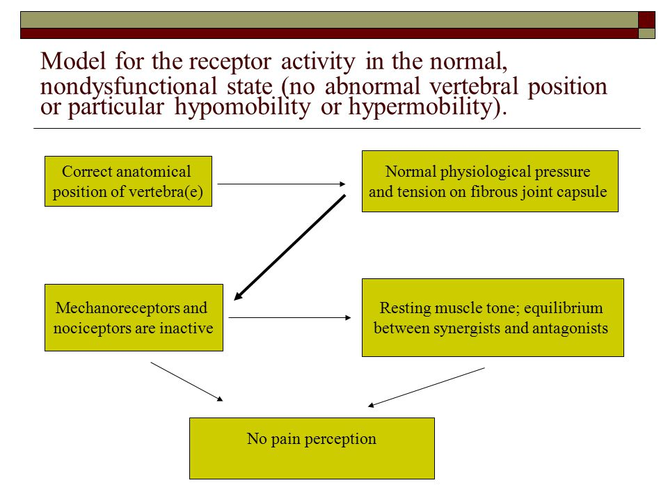 Model for the receptor activity in the normal, nondysfunctional state (no abnormal vertebral position or particular hypomobility or hypermobility).