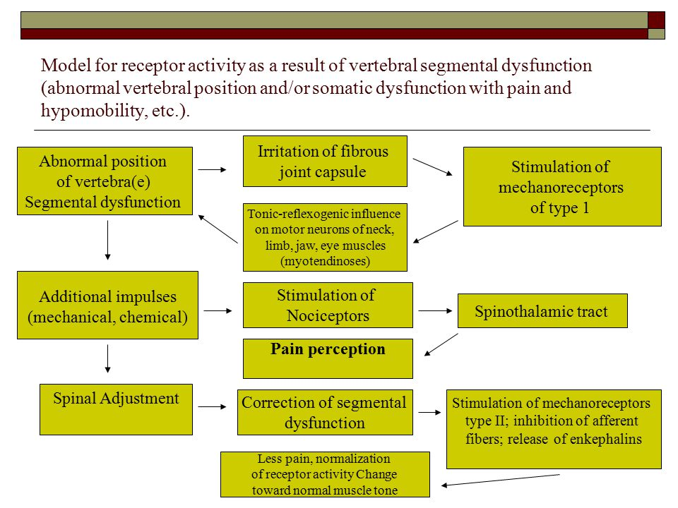 Model for receptor activity as a result of vertebral segmental dysfunction (abnormal vertebral position and/or somatic dysfunction with pain and hypomobility, etc.).