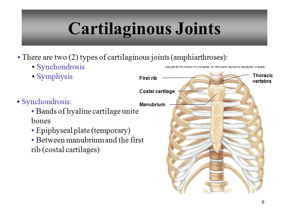 Cartilaginous Joints There are two (2) types of cartilaginous joints (amphiarthroses): Synchondrosis.