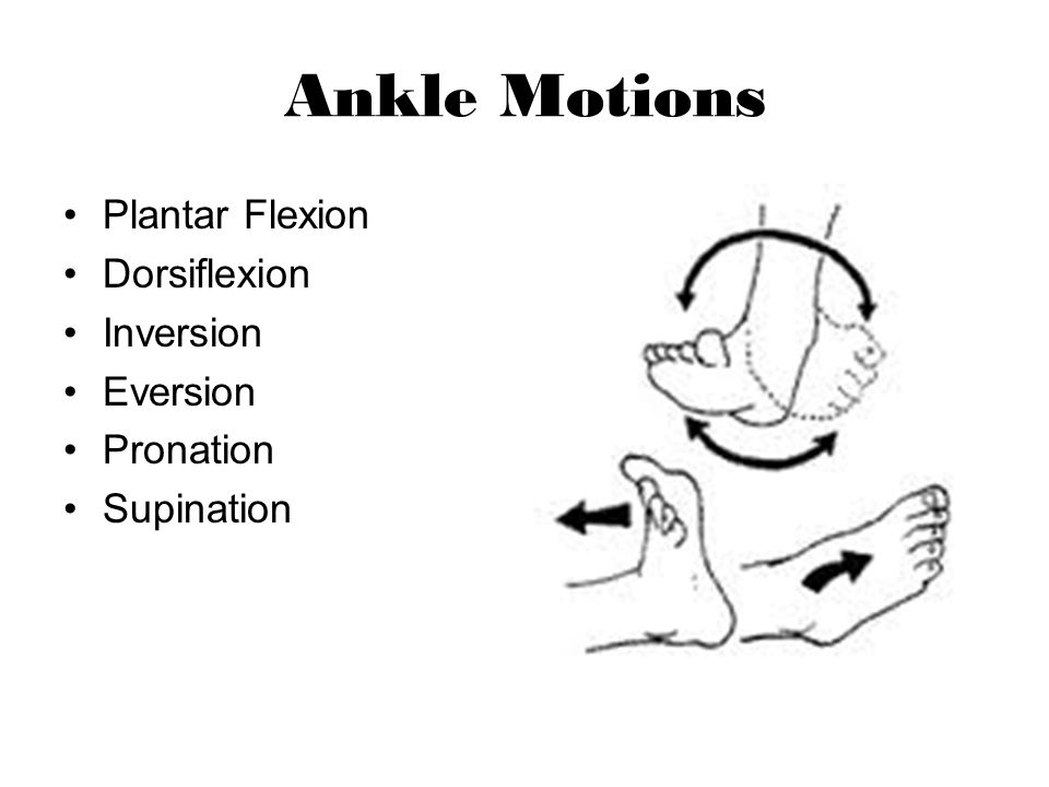 Ankle Motions Plantar Flexion Dorsiflexion Inversion Eversion