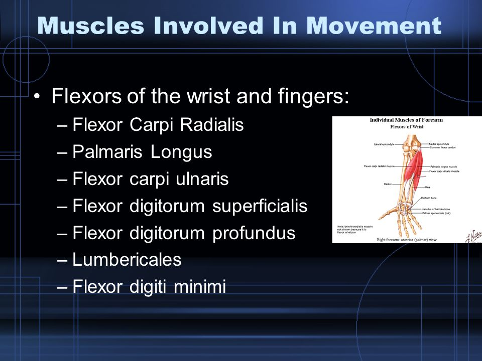 Muscles Involved In Movement
