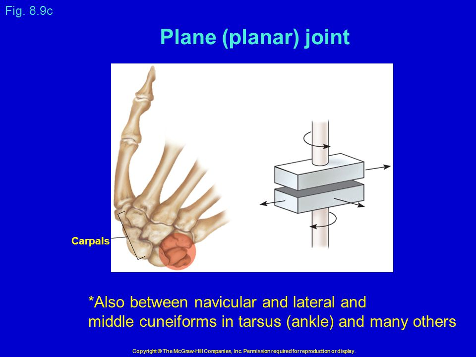 Plane (planar) joint *Also between navicular and lateral and