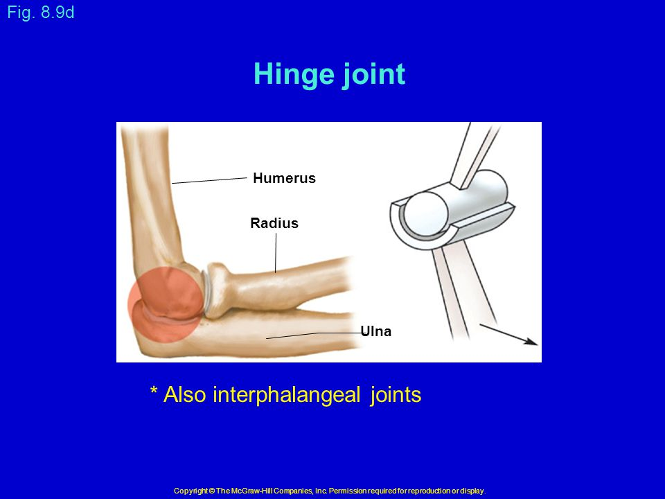 Hinge joint * Also interphalangeal joints Fig. 8.9d Humerus Radius