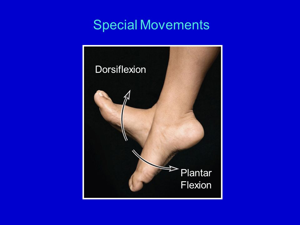 Special Movements Dorsiflexion Plantar Flexion