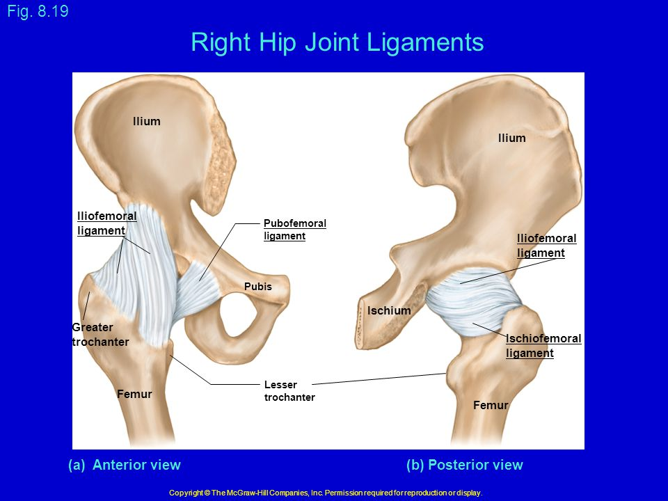 Right Hip Joint Ligaments