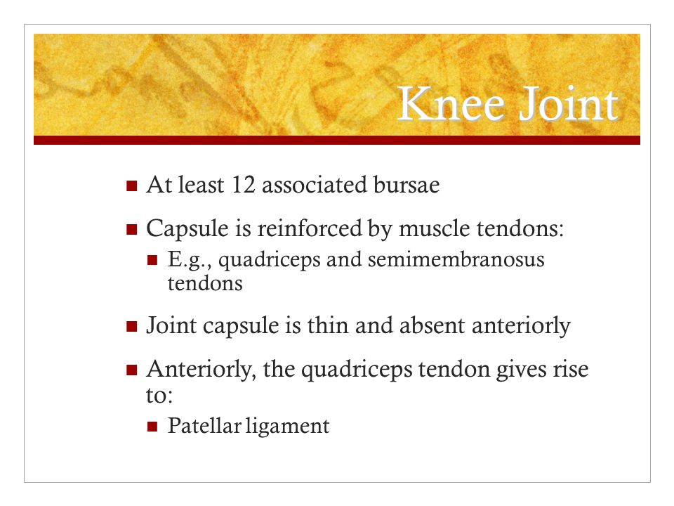 Knee Joint At least 12 associated bursae