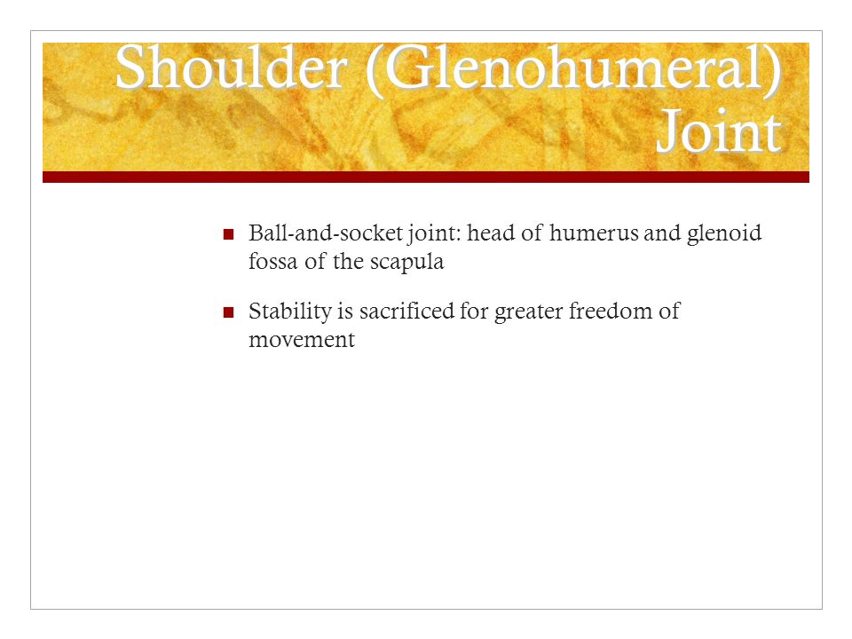 Shoulder (Glenohumeral) Joint