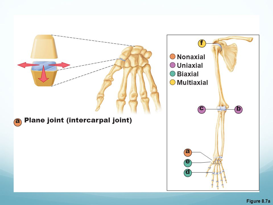 Plane joint (intercarpal joint)