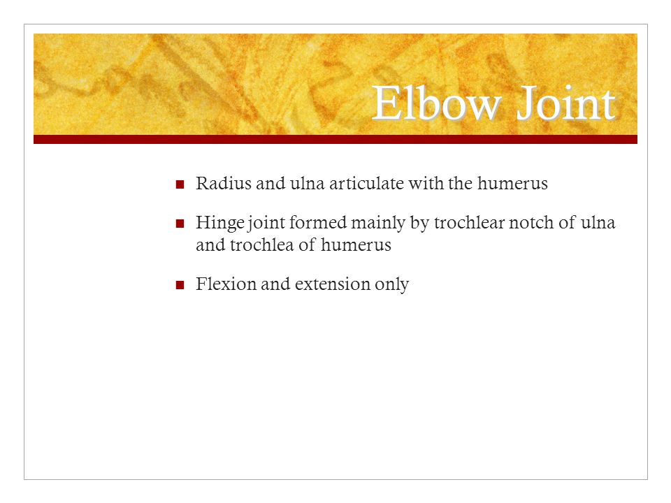 Elbow Joint Radius and ulna articulate with the humerus