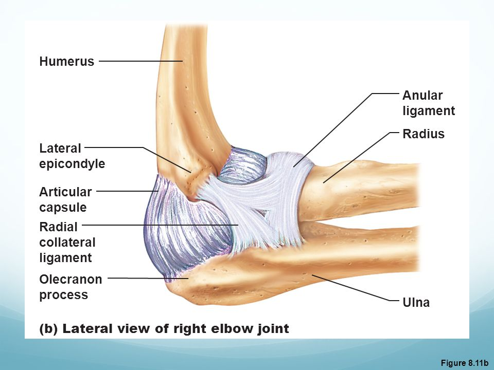 (b) Lateral view of right elbow joint