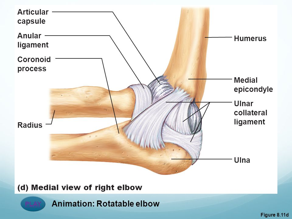 Animation: Rotatable elbow