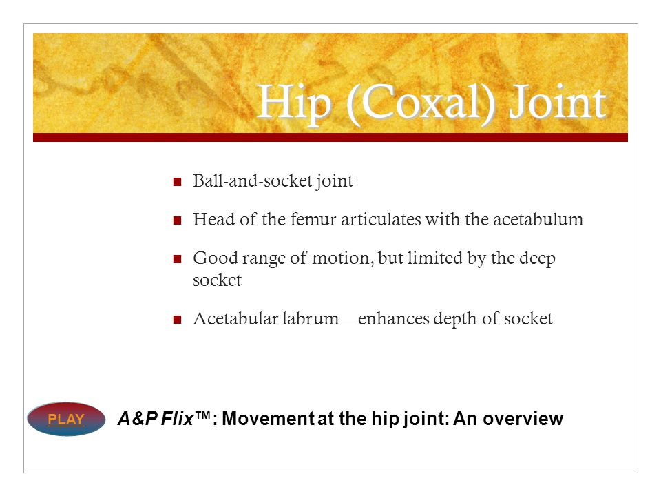 Hip (Coxal) Joint Ball-and-socket joint
