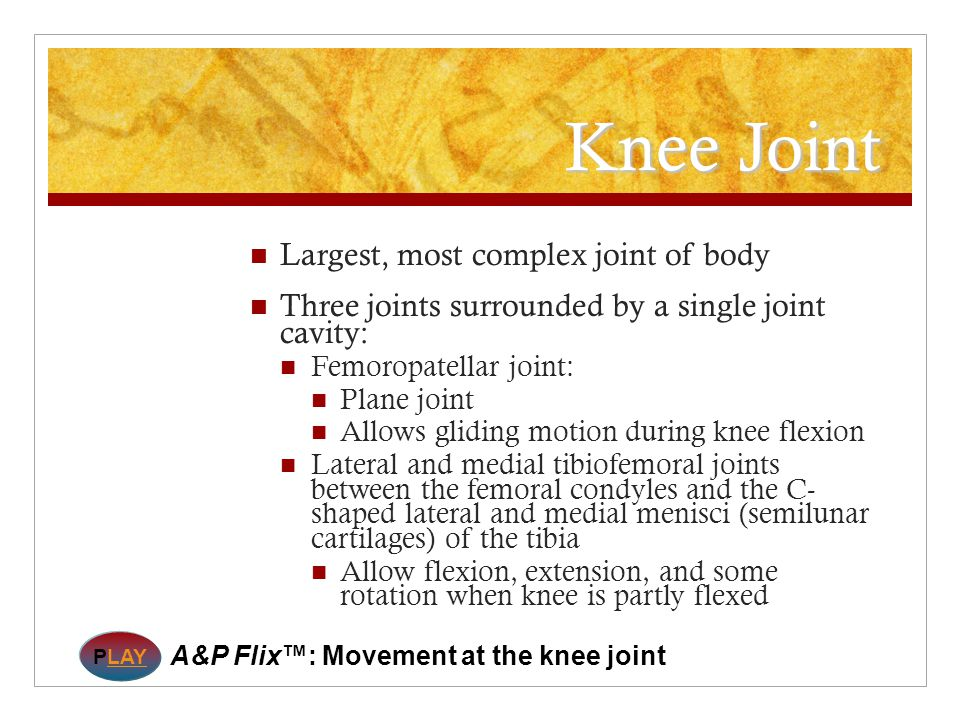 Knee Joint Largest, most complex joint of body