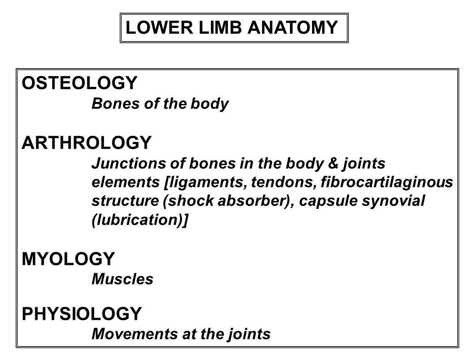 LOWER LIMB ANATOMY OSTEOLOGY ARTHROLOGY MYOLOGY PHYSIOLOGY