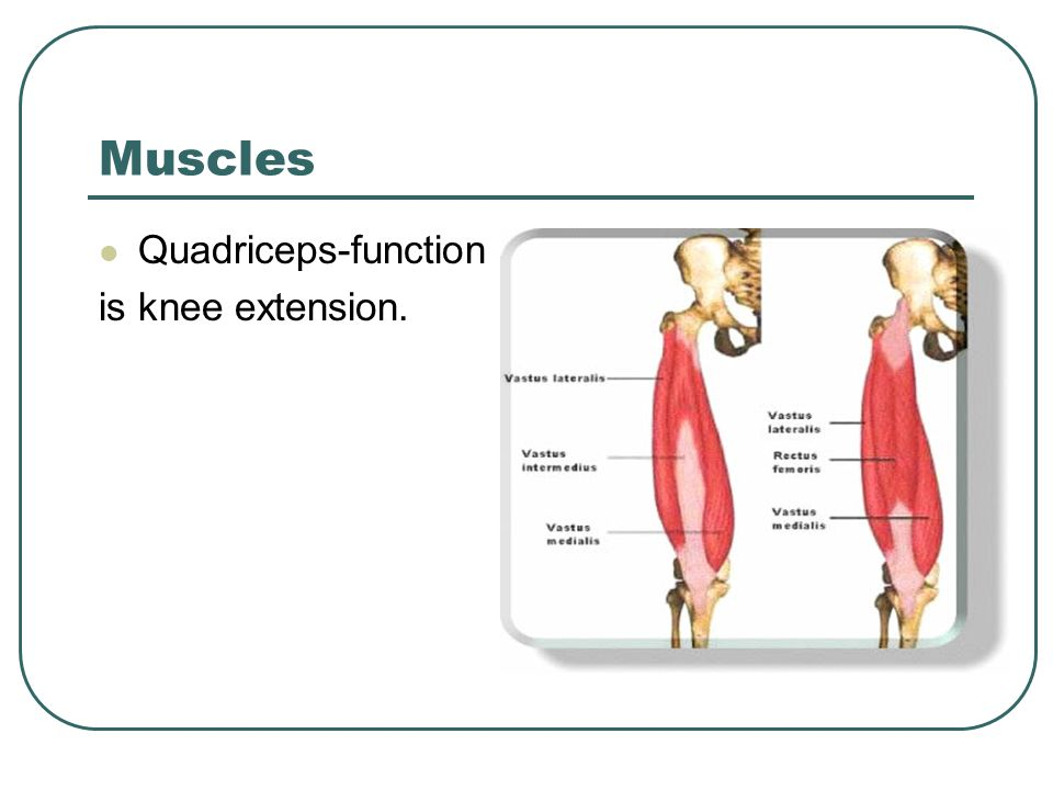 Muscles Quadriceps-function is knee extension.