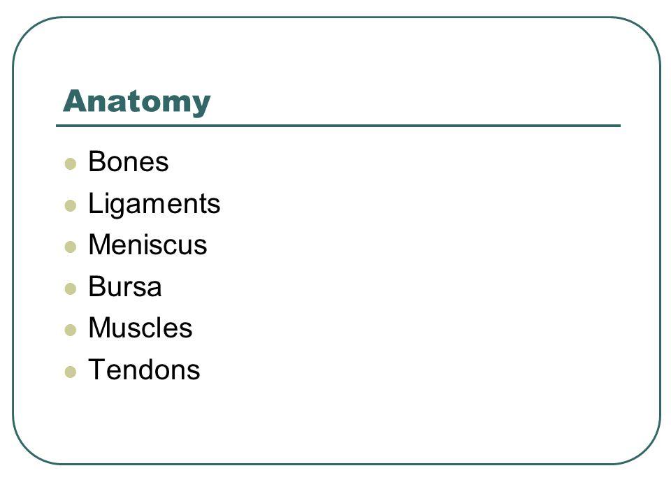 Anatomy Bones Ligaments Meniscus Bursa Muscles Tendons