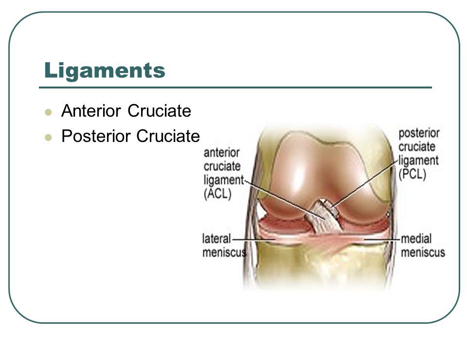 Ligaments Anterior Cruciate Posterior Cruciate