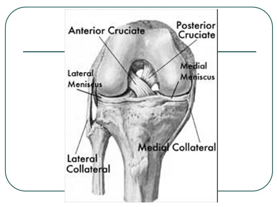 * The stabilizing roles of each ligament include: