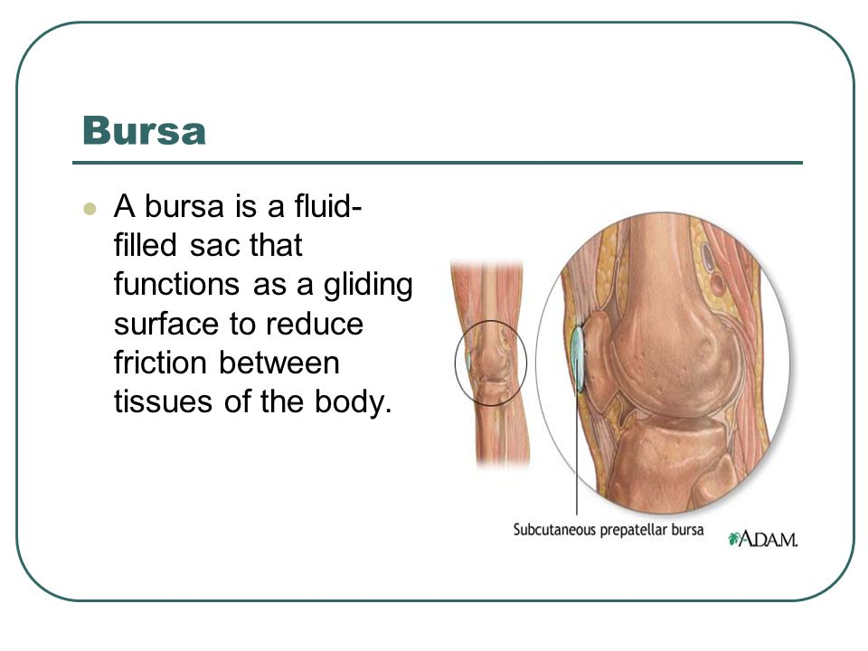 Bursa A bursa is a fluid-filled sac that functions as a gliding surface to reduce friction between tissues of the body.