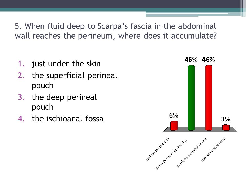 5. When fluid deep to Scarpa's fascia in the abdominal wall reaches the perineum, where does it accumulate