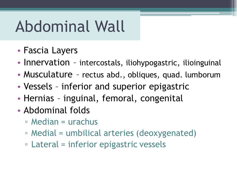 Abdominal Wall Fascia Layers