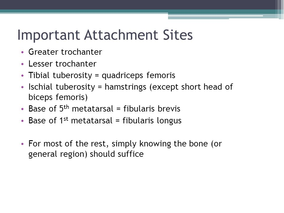 Important Attachment Sites