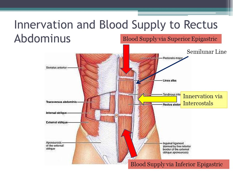 Innervation and Blood Supply to Rectus Abdominus